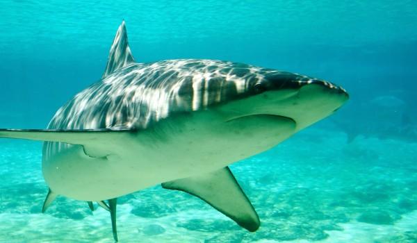 tiburones, acuarios, zoo madrid acuarium, bañarse con tiburones