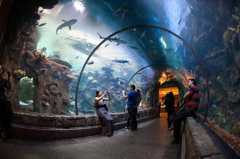 tiburones, acuario, zoo, ver tiburones