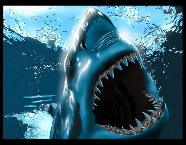 ataques tiburón, tiburon Florida, Australia, Sudáfrica