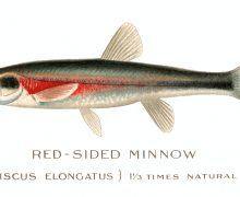 cosas chulas de pesca, news, noticias de pesca
