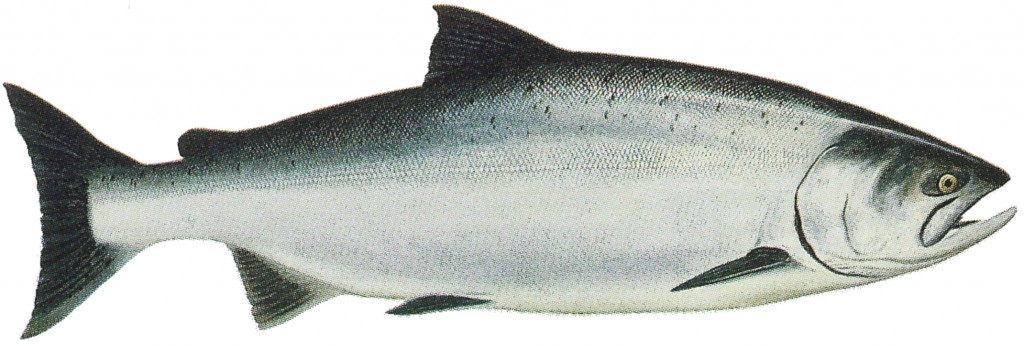 king salmon patagona, ríos pesca king salmon chile, pesca patagonia, pesca chiule, pesca argentina