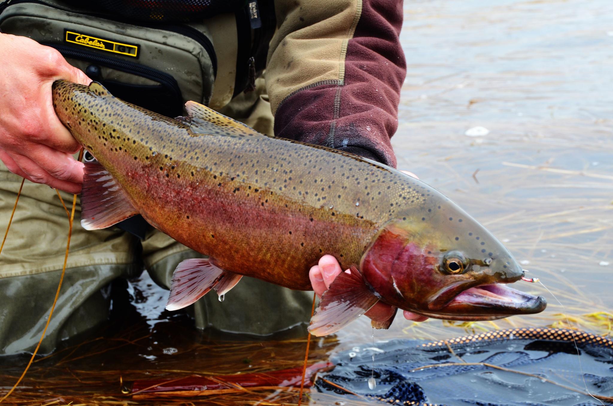pesca sin muerte, río, tramos sin muerte, catch and release, captura y suelta