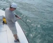 vídeo, tarpón, tiburón toro