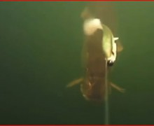 youtube, pike, underwater, film, kayak