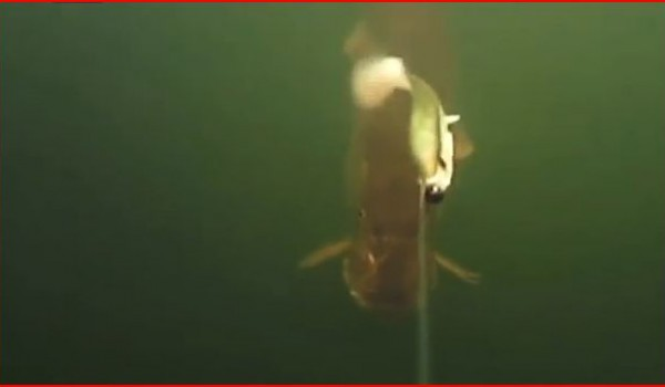 youtube, pike, underwater, film, kayak