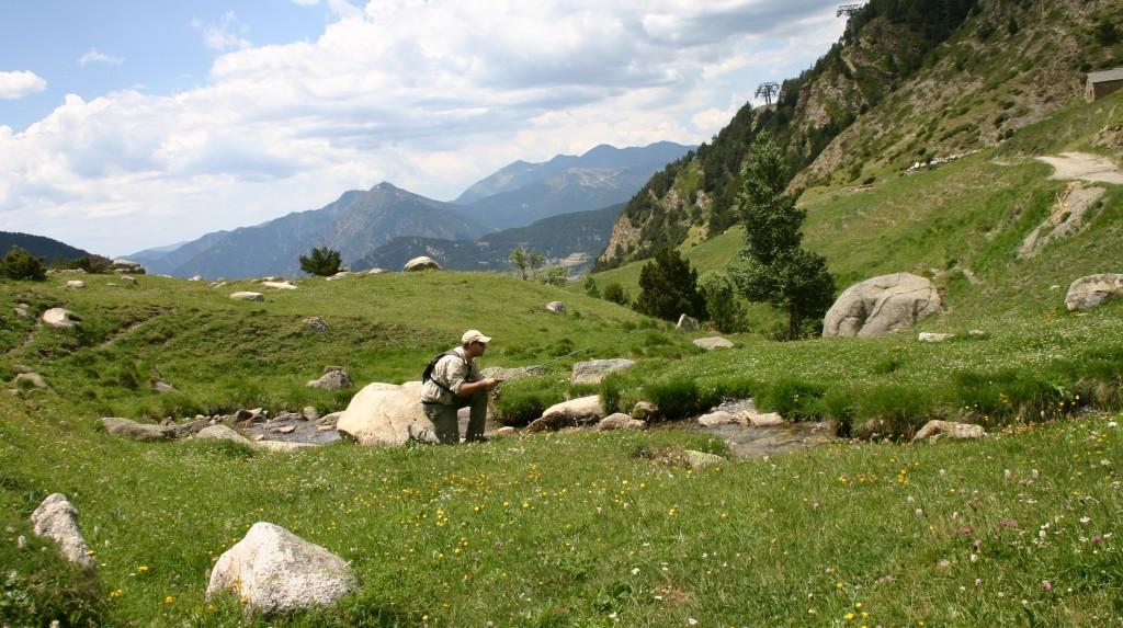 andorra, río, alta montaña. trucha