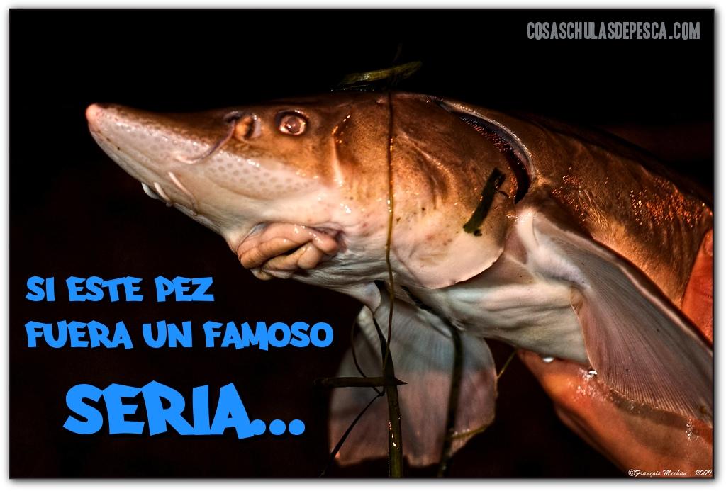 Meme, pesca