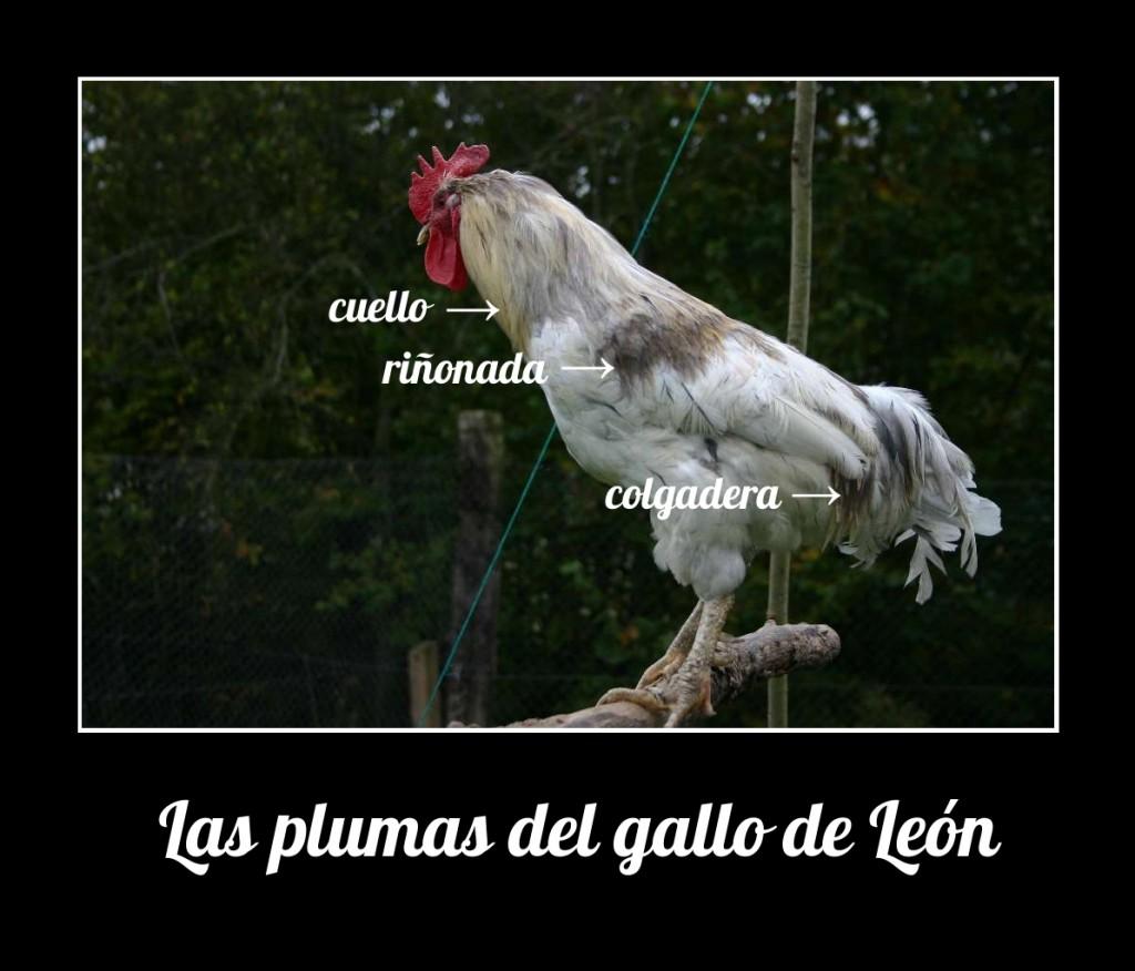 plumas, gallo, León, pesca, mosca, trucha