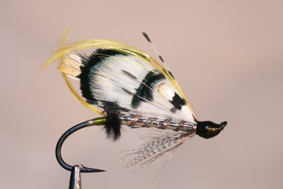 Spanish salmon fly.