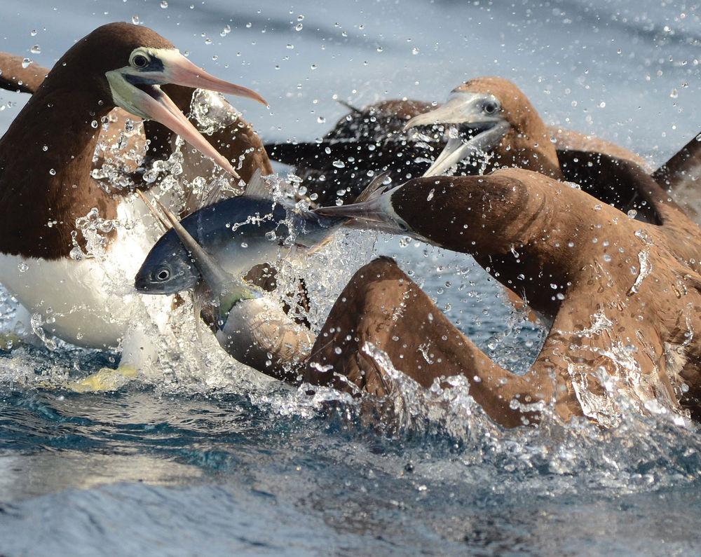 fotos pesca, Florida Sports Fishing Magazine, pesca, imágenes espectaculares, cosas chulas de pesca