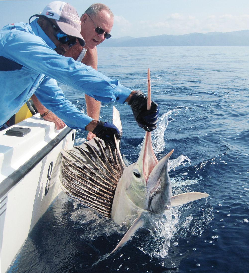 fotos pesca, Florida Sports Fishing Magazine, pesca, imágenes espectaculares, marlin blanco, marlin albino, cosas chulas de pesca