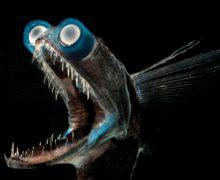 fotos pesca, Florida Sports Fishing Magazine, pesca, imágenes espectaculares