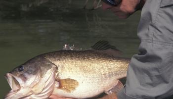 IGFA, récord consejos devolver los peces, pesca sin muerte
