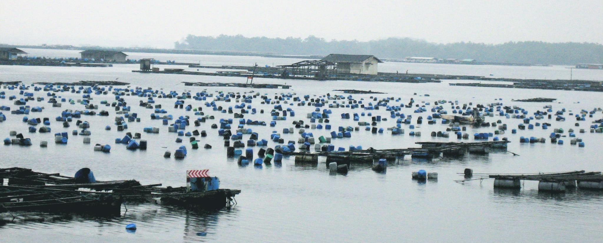acuicultura, piscicultura, granjas de pescado, sobrepesca, peligros, harinas de pescado, FAO, informe,