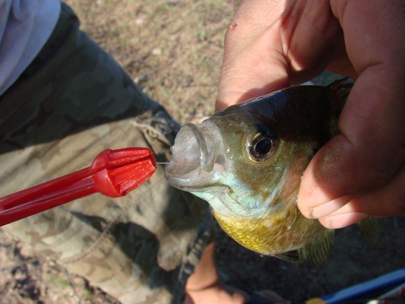 anzuelo, recomendaciones IGA soltar los peces, pesca, pesca sin muerte, captura y suelta