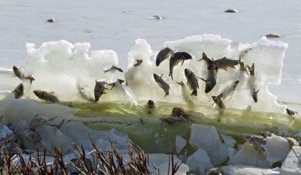 peces congelados en hielo, pesca, lago estados Unidos