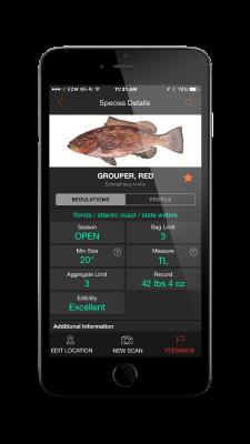 FishVerify, app pesca, reconocer peces con foto, aplicación para teléfono, identificar especies