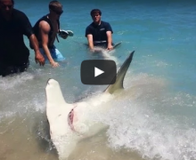 tiburón martillo, playa, muelle, Florida, Fort Lauderdale, muelle, hammerhead