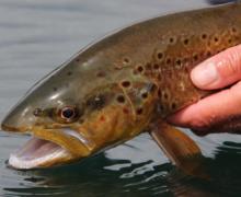 5 consejos para devolver un pez al agua
