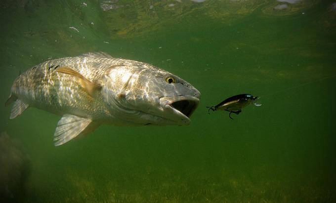 Jason Arnold, fotógrafo de pesca, fotos de pesca, Florida, revista de pesca, subacuática, submarina, vídeos de pesca