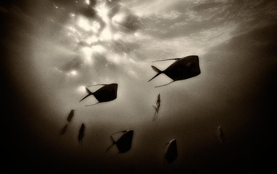 Descenso extraterrestre, fotografía de Kevin Dodge, fotos de pesca, Internet