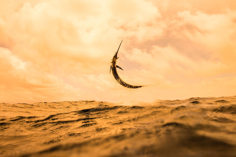 la danza del pez vela, Kevin Dogde, fotógrafo de pesca
