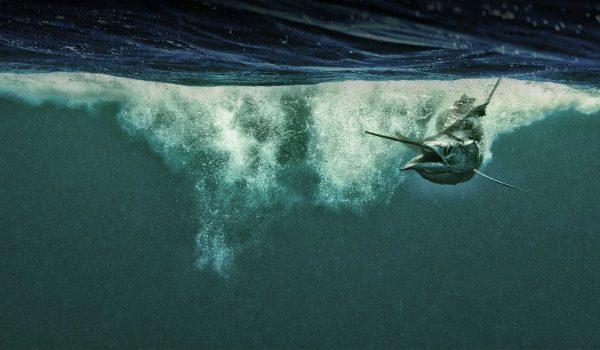 Kevin Dodge, fotos de pesca, cosas chulas de pesca