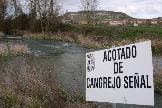 cangrejo señal, coto, Castilla y León, pesca, normas, cupos, tallas