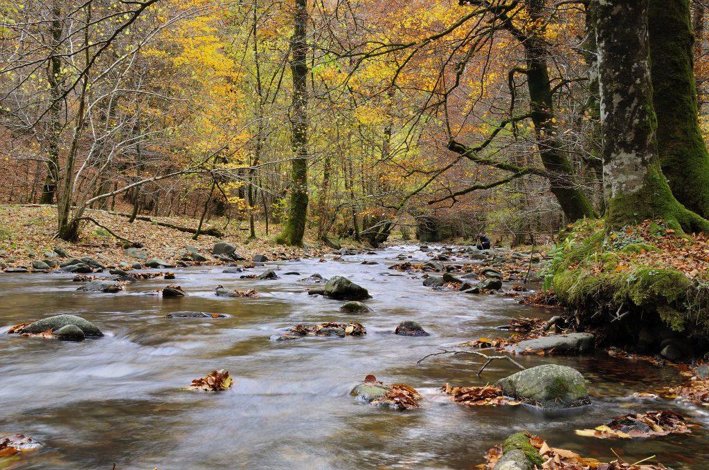 río Arga, Navarra, Quinto Real
