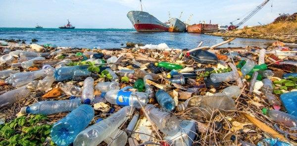 Seis kilos de plástico encontrados en el estómago de una ballena
