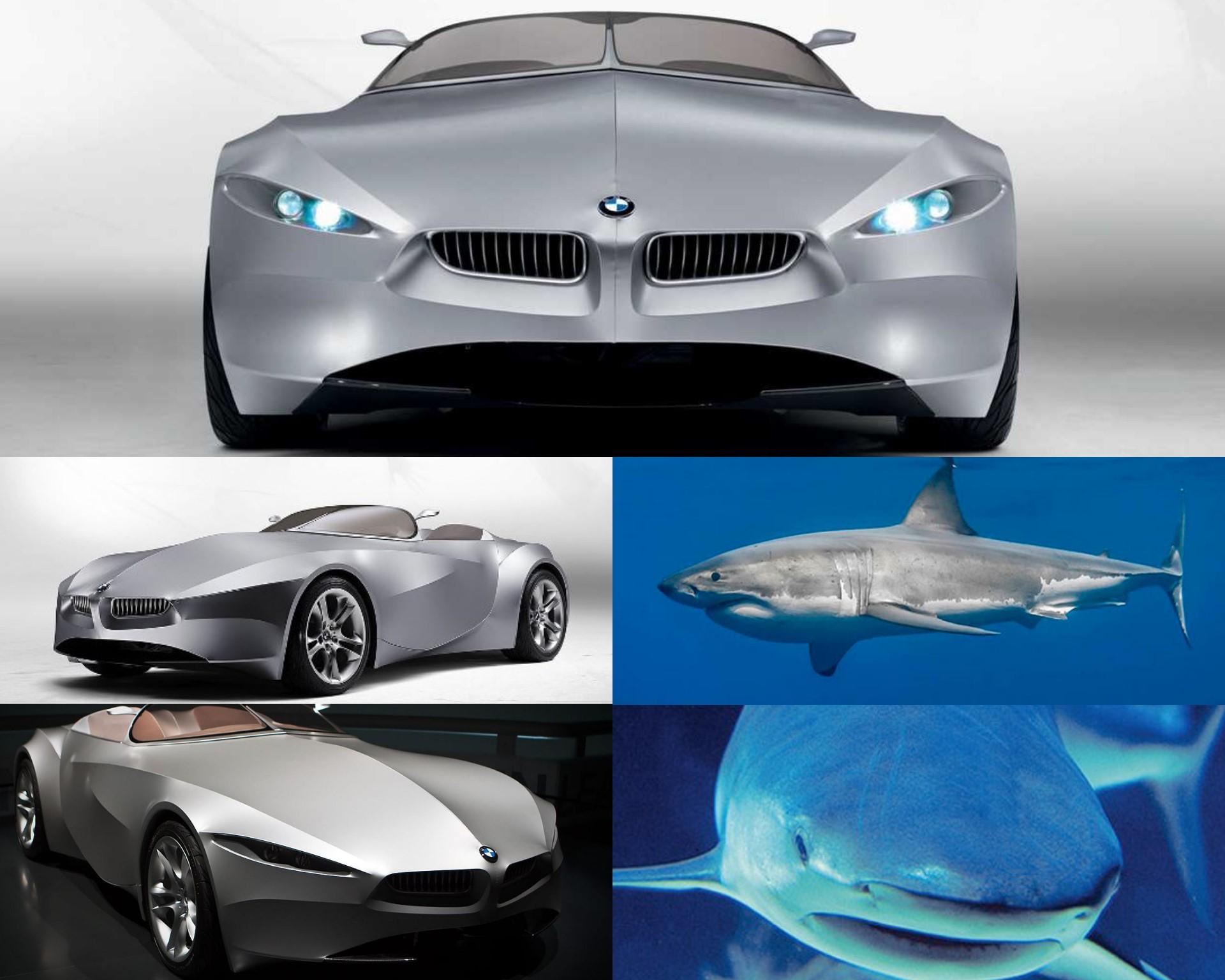 BMW Gina - Tiburón