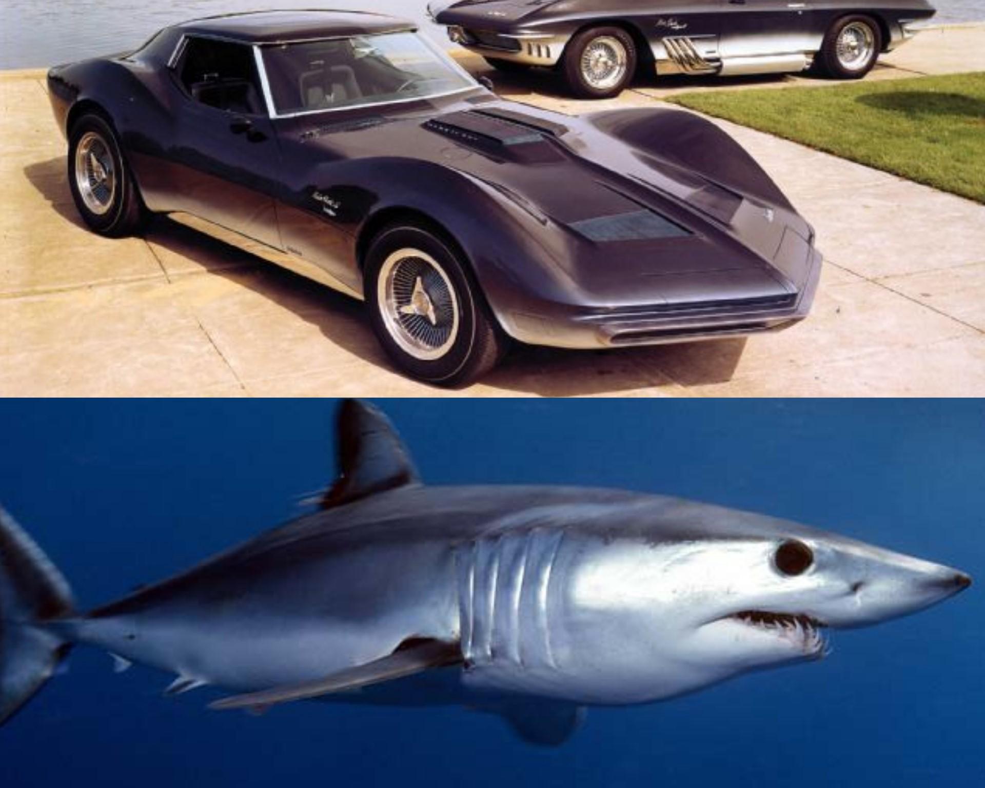 Corvette Mako Shark - Tiburón Mako