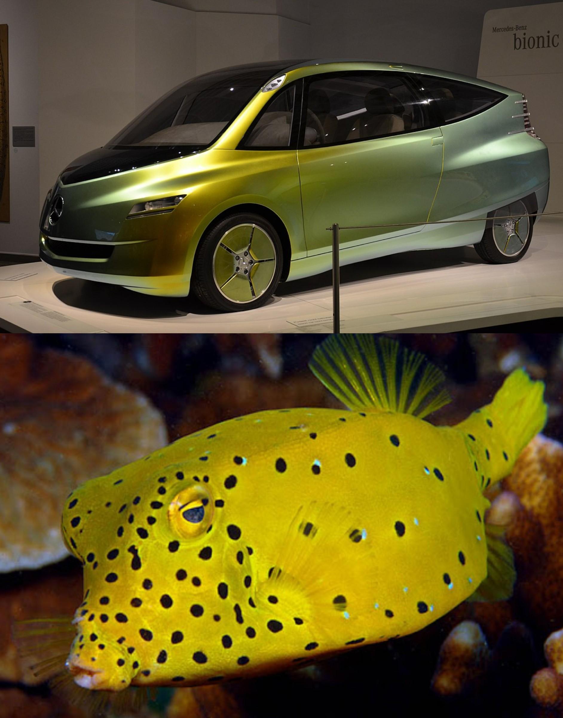 Mercedes Bionic - Pez Cofre